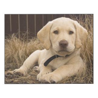 Labrador Retriever puppy Wood Wall Art