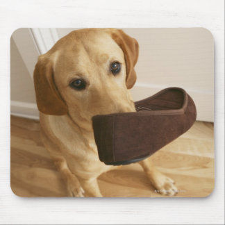 Labrador retriever puppy with slipper in his mouse pad