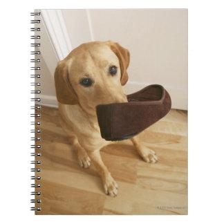 Labrador retriever puppy with slipper in his spiral notebook