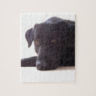 labrador retriever puzzle con fotos