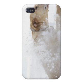 Labrador retriever que corre a través de nieve iPhone 4/4S carcasa