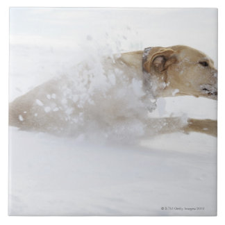 Labrador retriever que corre a través de nieve pro azulejo cuadrado grande