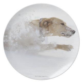 Labrador retriever que corre a través de nieve pro plato de comida