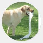 Labrador retriever que limpia pegatina redonda