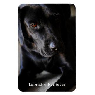 Labrador Retriever Rectangular Photo Magnet