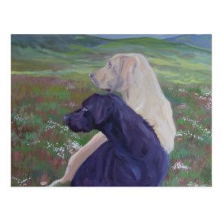 Labrador Retriever Rescue Scotland Postcard