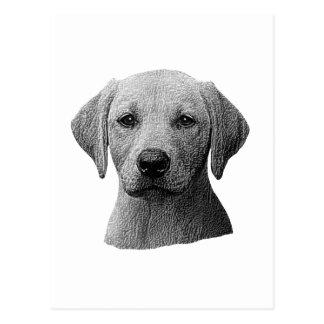 Labrador Retriever - Sylized Image - Add Text Postcard