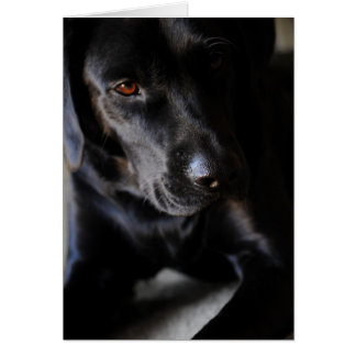 Labrador retriever tarjeta de felicitación