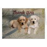 Labrador Retriever Thank You Card Pups On Beach