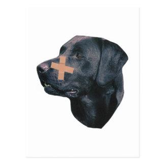 Labrador Retriever With Band-Aid Postcard