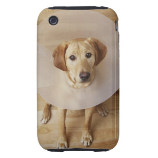 Labrador retriever with cone around his neck tough iPhone 3 case