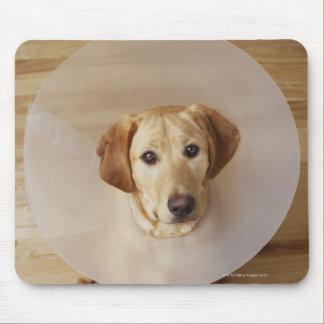 Labrador retriever with cone around his neck mouse pad