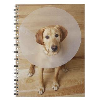 Labrador retriever with cone around his neck notebook
