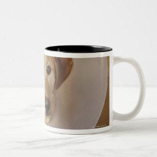 Labrador retriever with cone around his neck Two-Tone coffee mug