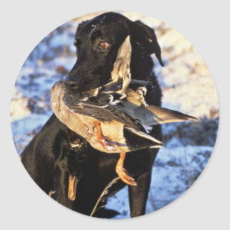 Labrador Retriever with Drake Mallard Classic Round Sticker
