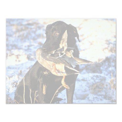 Labrador Retriever with Drake Mallard 4.25x5.5 Paper Invitation Card