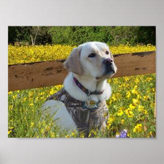 Labrador Retriever Yellow Flowers Poster