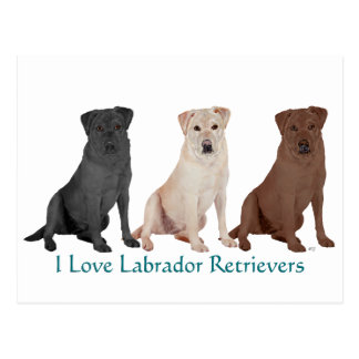 Labrador Retrievers - 3 Colors to Love Postcard