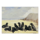 Labrador Retrievers On The Beach Print