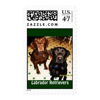 Labrador Retrievers Stamp