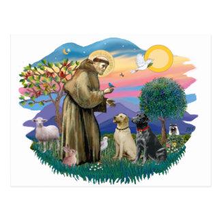 Labrador Retrievers (two) Postcard