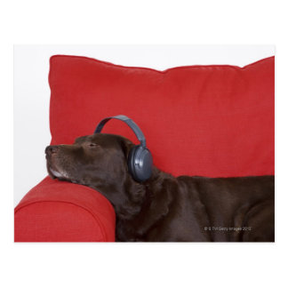 Labrador wearing headphones lying on sofa postcard