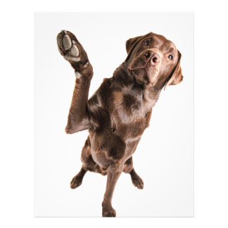 "Labrador with a Big High Five 8.5"" X 11"" Flyer"