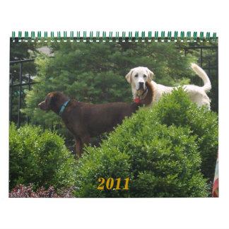 Labrador y calendario de oro