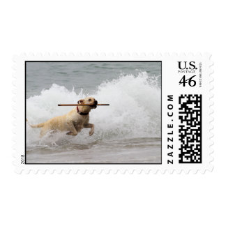 Labrador - Yellow - Go Fetch Postage