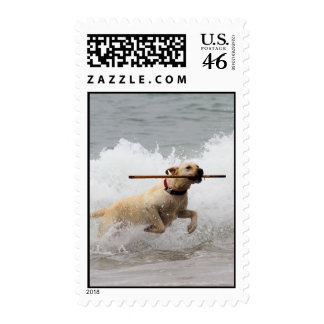Labrador - Yellow - Go Fetch Postage Stamps