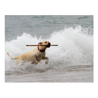 Labrador - Yellow - Go Fetch! Postcard