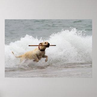 Labrador - Yellow - Go Fetch! Poster