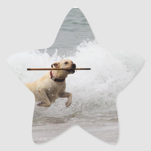Labrador - Yellow - Go Fetch! Star Sticker