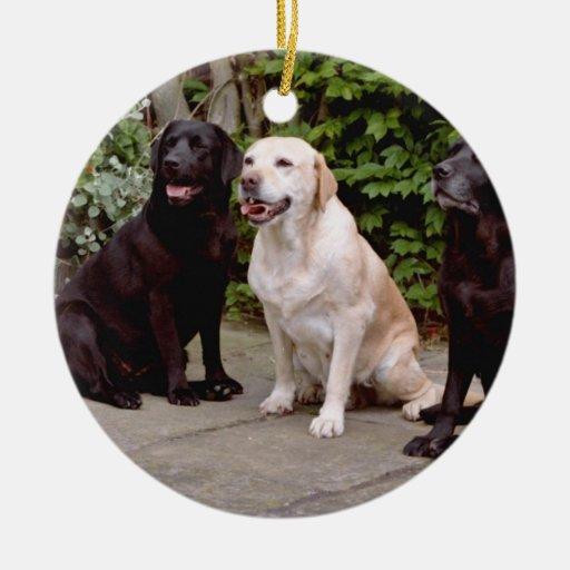 Labradores retrieveres del blanco tres que sientan adorno redondo de cerámica