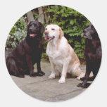 Labradores retrieveres del blanco tres que sientan etiqueta