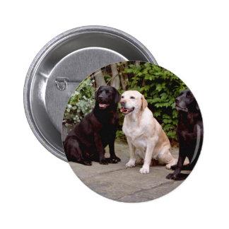 Labradores retrieveres del blanco tres que sientan pin
