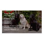 Labradores retrieveres del blanco tres que sientan plantillas de tarjetas personales