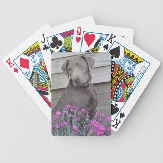 Labradors de plata barajas de cartas