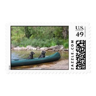 Labradors en canoa franqueo