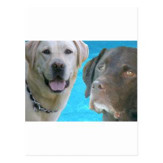 Labs Mr. Blue & Otis Postcard