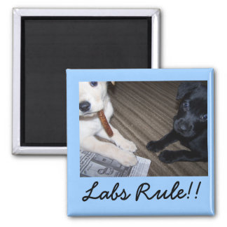 , Labs Rule!! 2 Inch Square Magnet