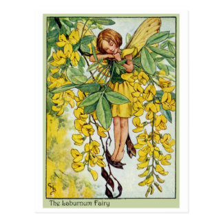 Laburnum Fairy Postcard