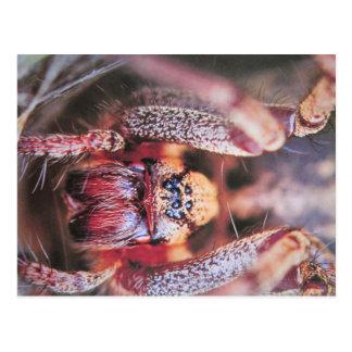 Labyrinth tiller postcard