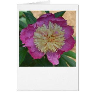 Lace and Taffetas Card