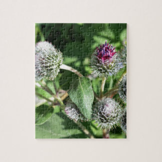 lace over thistle jigsaw puzzle