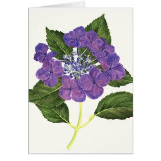 Lacecap Hydrangea Card