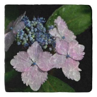 Lacecap Hydrangea Trivet