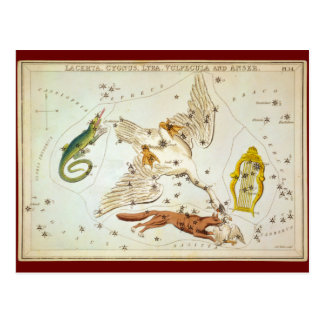 Lacerta, Cygnus, Lyra, Vulpecula and Anser Postcard