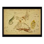 Lacerta, Cygnus, Lyra, Vulpecula y Anser Postales