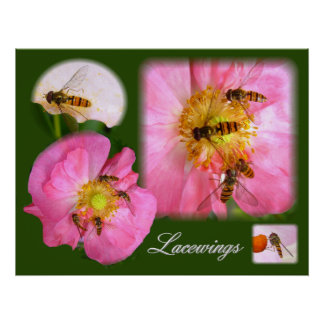 LACEWINGS ~ Poster